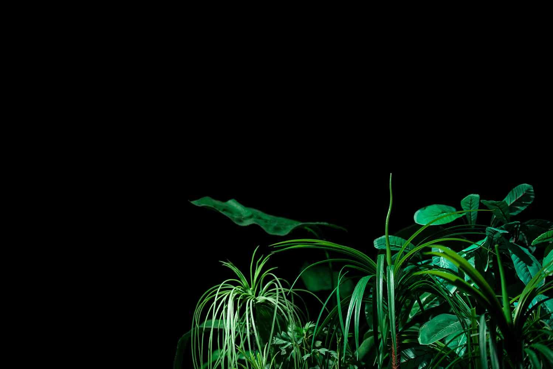 The Garden LOFFT